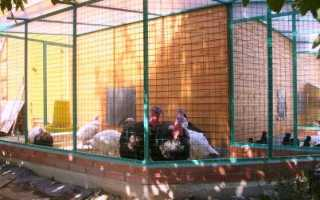 Птичник для индюков строительство и устройство фото. Как сделать сарай для индюков своими руками