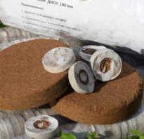Кокосовый торф применение. Как применять кокосовый субстрат в брикетах?