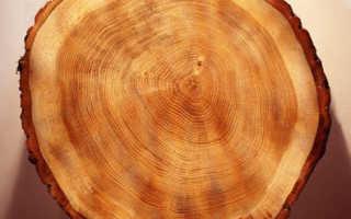 Характеристика древесины сосны. Сосна. Свойства древесины. Полезные свойства.