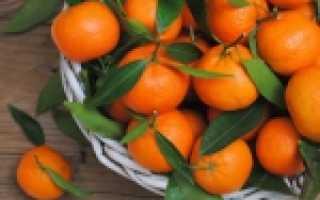 Мандарины в краснодарском крае выращивание. Кто будет выращивать мандарины в Сочи?