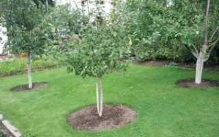 Схема посадки деревьев и кустарников на участке. Посадка плодовых деревьев и кустарников на садовом участке