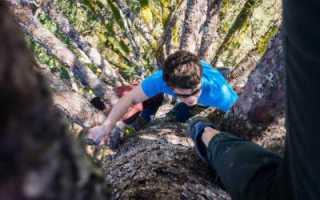 Приспособление залезть на дерево.