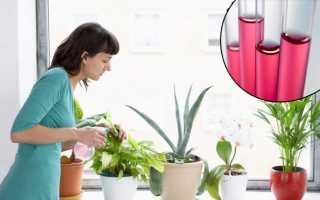Марганцовка от вредителей комнатных растений. Полив комнатных цветов марганцовкой