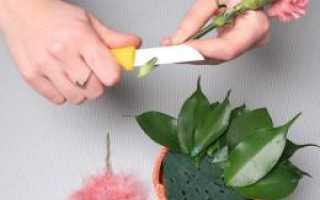 Чем можно заменить флористическую губку для цветов. Губка для цветочных композиций, где взять, как использовать, чем заменит