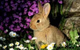 Кожные заболевания кроликов фото и описание. Кожные недуги у кроликов: как спасать ценную шубку?