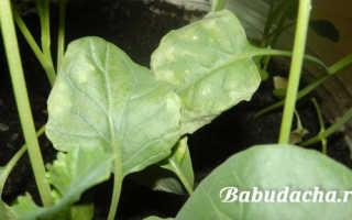 Цитовит для растений. Удобрение Цитовит – инструкция по применению для растений