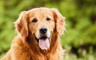 Куда колоть гамавит собаке. «Гамавит»: как и куда колоть собаке