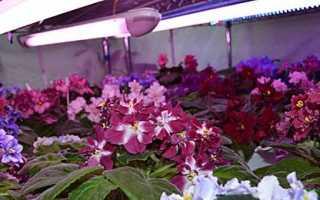 Чем подсвечивать растения зимой. Как ОСВЕЩАТЬ комнатные цветы и растения правильно? СОВЕТЫ!