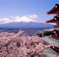 Сакура зимой. Сакура — символ Японии