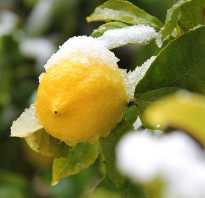 Можно ли замораживать лимоны в морозилке. Как сохранить лимоны? Можно ли их замораживать?