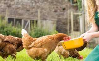 Сколько съедает курица в год. Сколько курица съедает в день корма