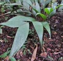 Комнатная пальмочка 4. Комнатная пальма — виды и уход