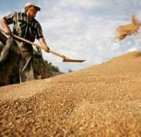 Когда собирают пшеницу с полей.