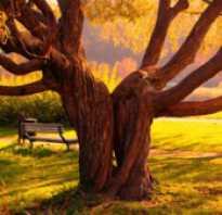 Сколько живет дуб в россии. Сколько лет живут берёза, дуб и липа