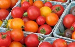 Томаты слот описание. Урожайный сорт томата «Слот F1»: секреты выращивания и описание сорта