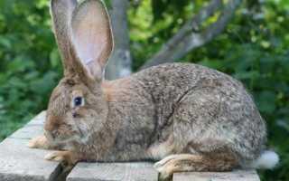 Кролики на даче видео. Разведение кроликов на дачном участке