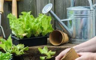 Что посеять в июне. Что можно посадить на даче в начале лета?