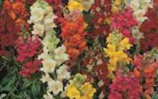 Садовые однолетники фото. Распространенные однолетние цветы для сада: названия, описания и фото