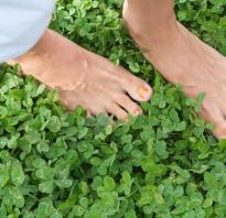 Низкорослый клевер. Клевер белый ползучий — низкорослая трава для всегда ухоженного газона