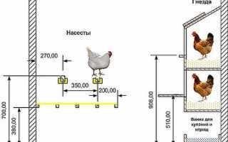 Помещение для кур и его обустройство. Комфортные условия содержания домашних кур – это правильно обустроенный курятник