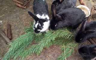 Можно ли сосну кроликам. Можно ли давать кроликам хвою? Сосна и елка в рационе декоративного кролика