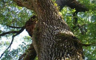 Структура ясеня фото. Текстура дерева-рисунок дерева