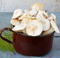 Посолить рядовки. Рецепты засолки грибов рядовок холодным способом