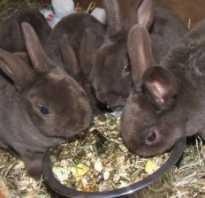 Растение горох можно ли давать кроликам. Можно ли кроликам давать горох