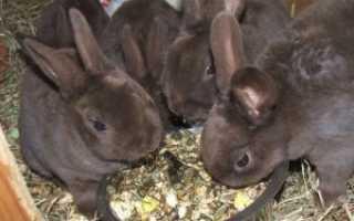Можно ли кроликам горох сухой. Можно ли кроликам давать горох и другие бобовые культуры