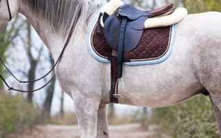 Кони характеристика. Домашняя лошадь
