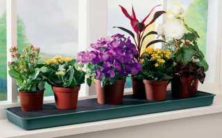 Чем лучше поливать комнатные цветы. 11 натуральных удобрений для домашних цветов