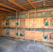 Кролики в гараже зимой. Разведение кроликов в гараже: особенности и характеристика данного способа