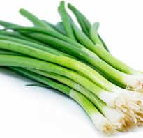 Польза и вред зеленого лука. Зеленый лук: польза, состав и вред для организма