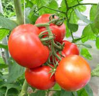 Томаты ажур. Характеристика и описание сорта томата Ажур f1, его урожайность