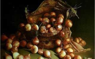 О пользе лука для детей. Рассказ про лук для детей
