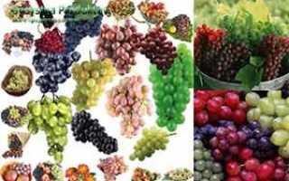 Молдова виноград полезные свойства. Польза и вред винограда. Что важно знать об этих ягодах?