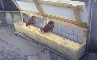 Сколько курица есть корма в сутки. Сколько ест курица в сутки?
