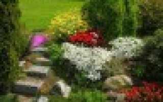 Кустарник с черными ягодами фото. Декоративный кустарник с черными ягодами – какое место он займет в вашем саду?