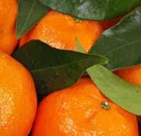 Мандарин какой витамин. Какие витамины содержит мандарин