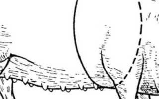 Определение живой массы свиней по промерам. Способы определения веса свиньи