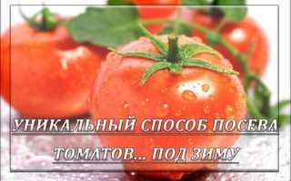 Посадка томатов под зиму в теплице. Подзимний посев томатов