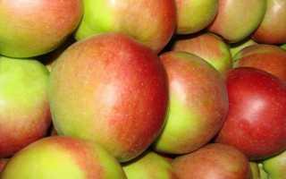 Сорт яблони лигол отзывы. Сорт яблони Лигол