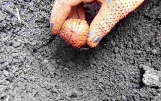 Посадка грецкого ореха осенью саженцем видео. Как вырастить грецкий орех из орешка?