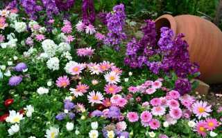Синие бордюрные цветы. 42 растения с синими цветками