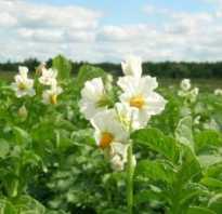 Средство бутон для цветов. Регуляторы роста растений: инструкция по применению стимулятора цветения «Бутон»
