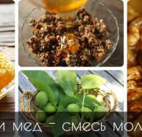 Орехи с медом как принимать. Грецкий орех с медом