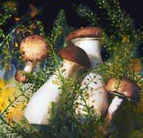 Маринованные подтопольники на зиму рецепты. Подтопольники маринованные на зиму. Как солить и мариновать грибы?
