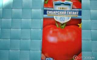 Томат сибирский гигант отзывы фото. Томат Сибирский гигант