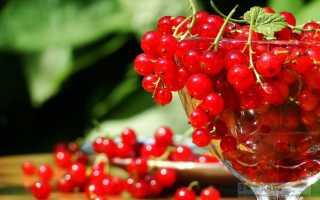 Смородина красная сахарная описание. Описание вкусной и сочной красной смородины сорта Сахарная