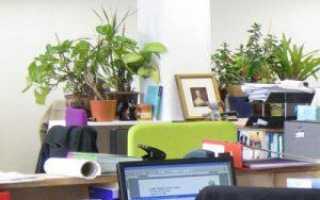 Цветы в офис какие лучше. КАКИЕ РАСТЕНИЯ ВЫБРАТЬ ДЛЯ ОФИСА